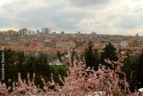 25 Ankara