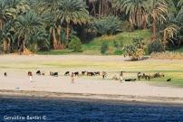 25 River Nile
