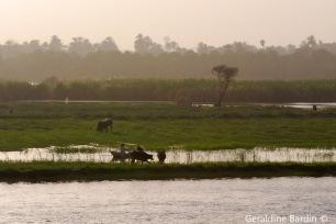 26 River Nile