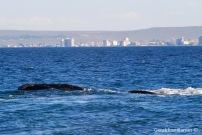 Ballenas en el Doradillo