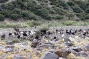 Valle de las leñas