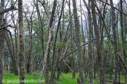 Bosque dentro de Parque Nacional
