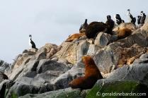 Lobos de mar de un pelo en Canal de Beagle