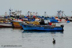 Puerto de Paracas