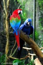 Parque das aves, en Foz do Iguazú