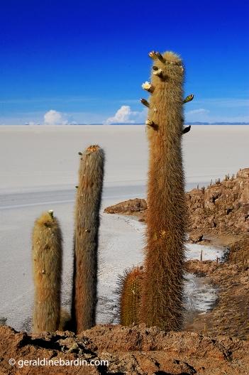 Isla Incahuasi en el Salar de Uyuni