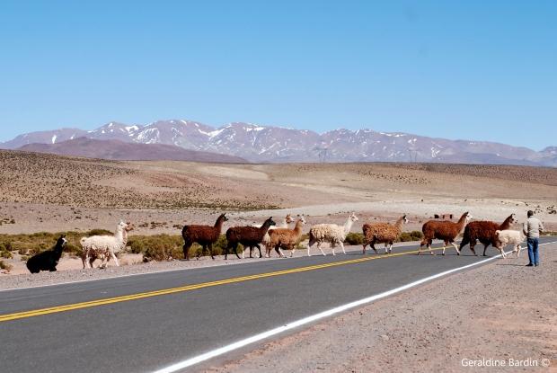 Camino a Salinas Grandes